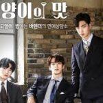 Кошачий бар 2 / Taste of Cat 2 (2019) Южная Корея